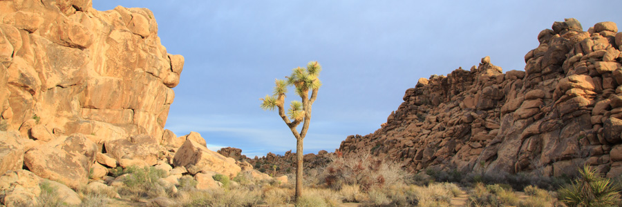Latitudes_JoshuaTree_004