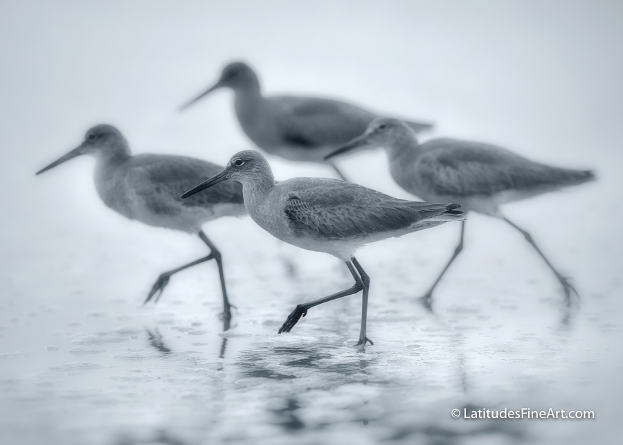 Shorebird Dance