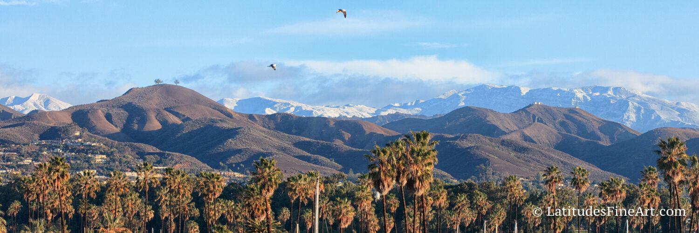 Two Trees, Ventura
